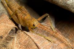 The Family Tettigoniidae Known As Bush Crickets Contains More Than 6 400 Species - stock photo