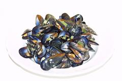 Opened boiled mussels Stock Photos