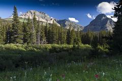 Cut Bank Creek meadow - stock photo
