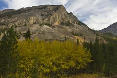 Mountain aspens - stock photo