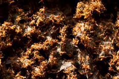 Large Colony Of Termites In Ecuadorian Amazon Basin - stock photo