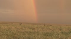 Rainbow in the bush 1 Stock Footage