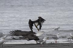 Eagles Landing Kuvituskuvat