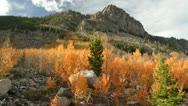 Stock Video Footage of Fall colors aspen trees