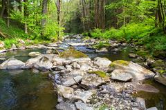small wild river in bohemian forest - stock photo