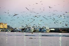 Harbor Scene In Sunset Light Fishing Boats And Seagulls Medium Telephoto Lens On Stock Photos