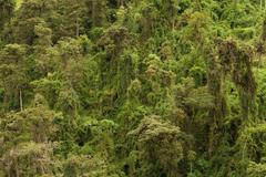 Dense Vegetation In A Tropical Rainforest High Point Of View - stock photo