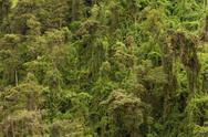 Stock Photo of rainforest theme horizontal