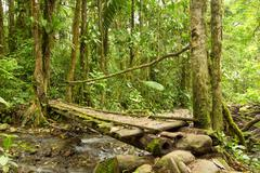 Small Bridge In The Ecuadorian Jungle Made From Wood The Only Material Available - stock photo