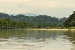 Stock Photo of Amazonian Jungle Shot From The Water Level On Napo River In Ecuador