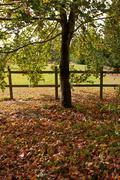 Paddock in Autumn Stock Photos
