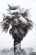 Hot tree, cold weather - stock photo