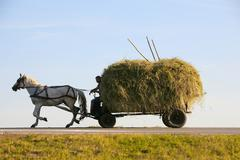Cart Full Of Hay Drown By A White Horse On The Road To Home From The Field After - stock photo