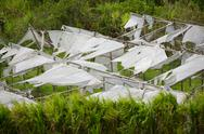 Storm Effects On A Plastic Greenhouse Stock Photos