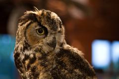 Wise old owl Stock Photos
