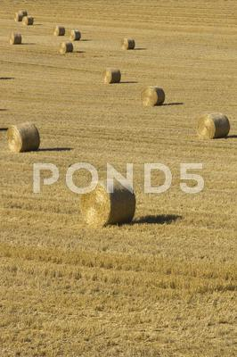 Stock photo of Bales in field