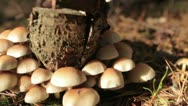 Mushroom beautifull slider shot Stock Footage