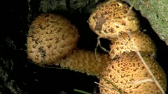 Mushroom beautifull zoom shot Stock Footage