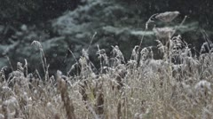 Slow Motion Falling Snow on Dead Grasses by Forest Stock Footage