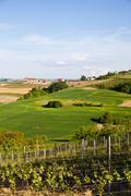 Italian vineyard: monferrato Stock Photos