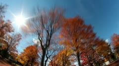 Tall Trees Fall Foliage Timelapse - stock footage