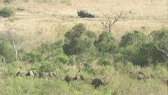 Tourists watching herd of elephants Stock Footage