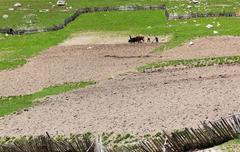 traditional georgian farming. ushguli village. upper svaneti. georgia. - stock photo