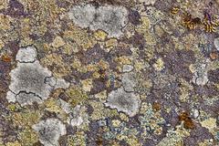 granite rocks covered with lichen - stock photo