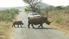 Stock Video Footage of Rhino and calf cross the road