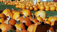 Stock Video Footage of Pumpkins For Sale At Pumpkin Patch- Tecumseh OK