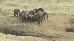 Elephants walking to the waterhole Stock Footage