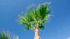 Beauty palm-trees in Antalya, Turkey. Stock Footage