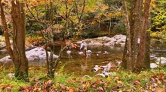 Man fly fishing autumn mountain stream Stock Footage