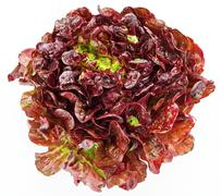 red cabbage lettuce head isolated on white - stock photo