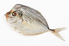 salted moonfish isolated  on white background - stock photo