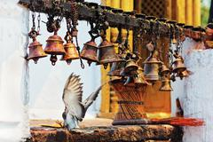 many metal sacrificial bells hanging on chain and landing dove, pokhara, nepa - stock photo