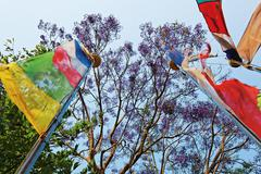colored prayerful flags in front of blue sky and tree branches, pokhara, nepa - stock photo