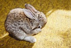 washing baby rabbit - stock photo