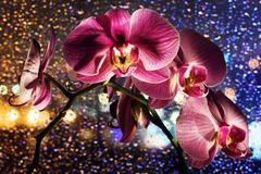 pink orchid on colored background with drops - stock photo