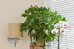orchid and green plant in front of jalousie light - stock photo