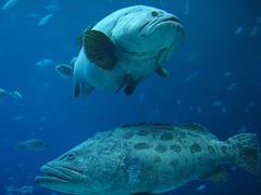 Saltwater Fish Stock Photos