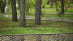 Autumn rain. Stock Footage