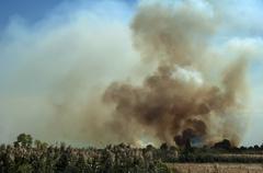 fire in a field - stock photo