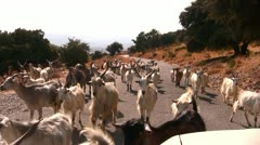 Goat herd on road Stock Footage
