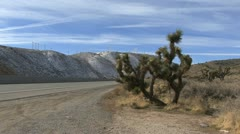 Wind farm highway and joshua tree Stock Footage