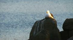 Seagull Stock Footage