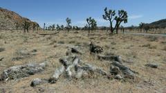 Joshua Tree National Park landscape Stock Footage