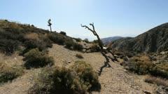 Joshua Tree National Park Keyes View Stock Footage