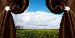 beautiful rapeseed field - stock photo