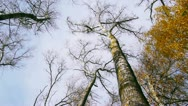 Panoramic shot treetops in autumn forest Stock Footage